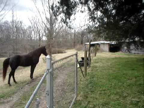 Their Horse Was Acting Strangely, So They Set Up A Camera...