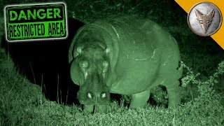 Night of the HUNGRY HIPPOS! by Brave Wilderness