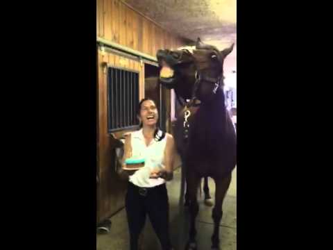 And Now... A Horse Blows Out It's Birthday Candles