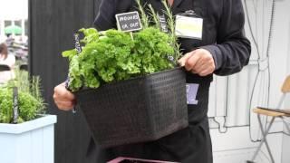 #474 Hampton Court Flower Show 2011 - Pflanzen-Möbelsymbiose