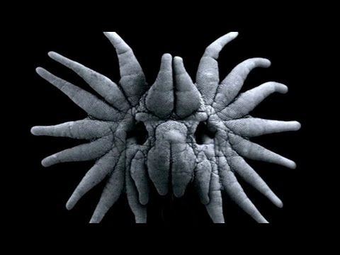 True Facts About The Star Nosed Mole %28with Ze Frank%29 - Earth Unplugged