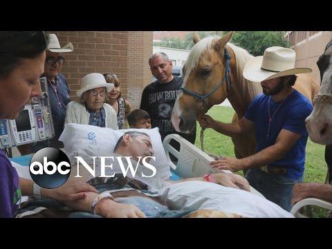 退休軍人臨終前望能見到最心愛的馬兒,他們見面一刻全世界都噴淚了!