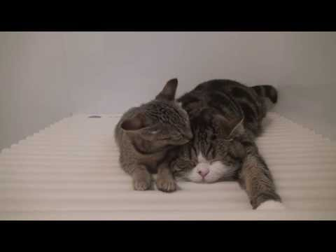 maru - While I take a bath, Maru and Hana are relaxed on the cover of bathtub.