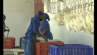 Video del Día Mundial de la Alimentación 2006