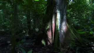 Greenman (Last Tree Falling)