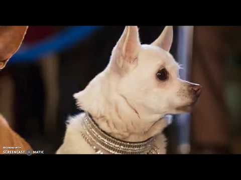 Show Dogs Trailer 2018