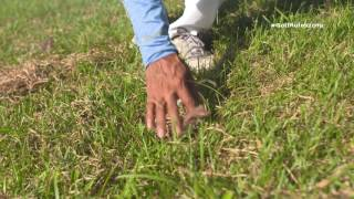 No penalty for moving loose impediments, touching the ground, or grounding your club in a penalty area. To learn more about Modernizing Golf's Rules, visit w...