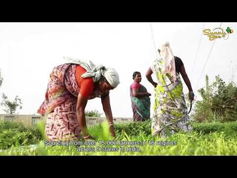 SunnyBee - Corporate Video