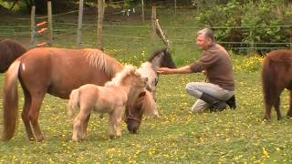 My life with little horses