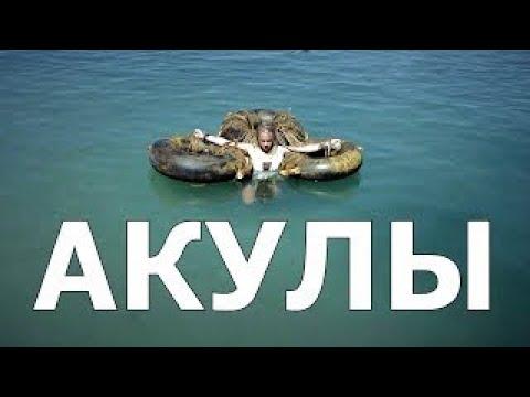Кино 2017 Новинка Империя Акул (Мощный Фильм) - DomaVideo.Ru