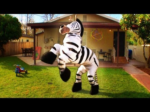 Rhett And Link - Zebra Dance