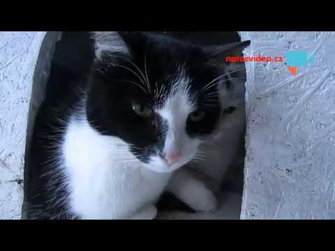 I kočky(kocouři) mají svůj domeček a majího zateplený