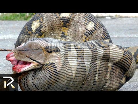 i 10 animali più pericolosi in australia