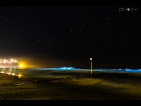 bio luminescence - Some incredible Bio-luminescence along Manly Beach - Blue waves! More form Joel at http://www.saltmotion.com Photographs from this event here: http://www.sal...