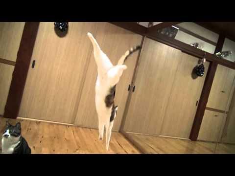 貓咪在慢鏡頭下完美地表演落地的一刻!可愛~