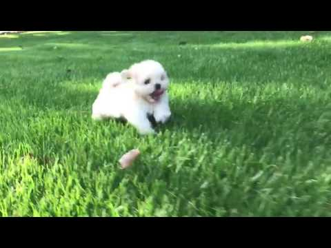 Bailey loves to run and play in the grass