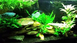 """""""Around the World"""" Update of My fish Room 12/31/16"""
