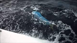 Pescaria Plataforma Merluza 2013