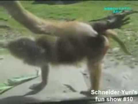 Video clip hài Thú vật ngộ nghĩnh12 Video clip hài hước