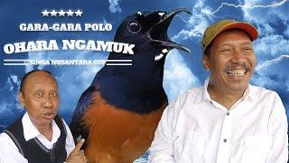 Video BRANDY WATCH : Gara-Gara Pelawak POLO Murai Batu OHARA Ngamuk Di Singa Nusantara Cup MP3, 3GP, MP4, WEBM, AVI, FLV Februari 2019