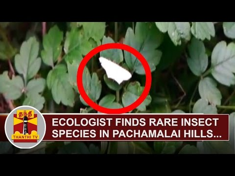 Ecologist-finds-Rare-Insect-Species-in-Pachamalai-Hills-Tiruchiraplli-Thanthi-TV
