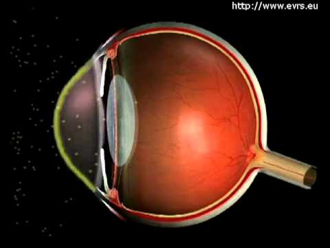 pourquoi la pupille est noire