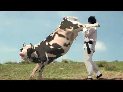 The Funny Man vs Cow Fight HQ