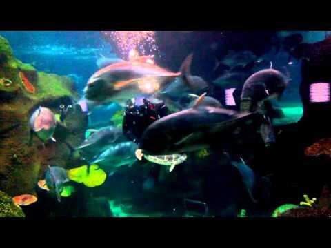 Кормление акул!!! Океанариум в Астане! (видео)