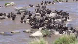 Nonton Wild Mara River Crossing 2 Film Subtitle Indonesia Streaming Movie Download