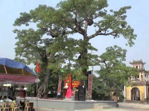 Lễ đón nhận Bằng Cây Di sản Việt Nam