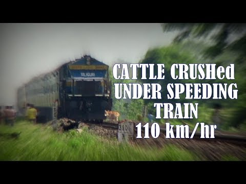 Video LIVE ACCIDENT: CATTLE CRUSHed by High Speed train at 110 km/hr | Lohit Express runs over cow download in MP3, 3GP, MP4, WEBM, AVI, FLV January 2017