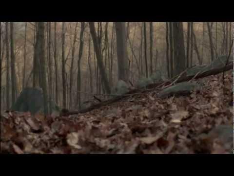Richard Harrow in the Woods
