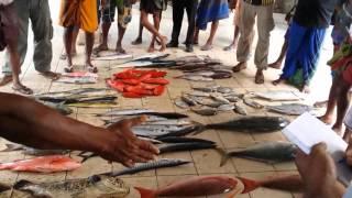 Weligama Sri Lanka  city images : Fish Market Weligama, Sri Lanka