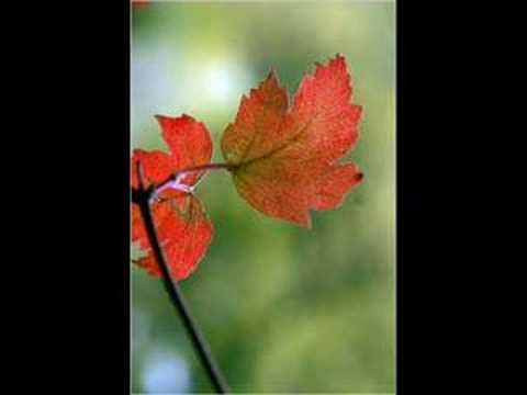 Tekst piosenki Ella Fitzgerald - Autumn in New York po polsku