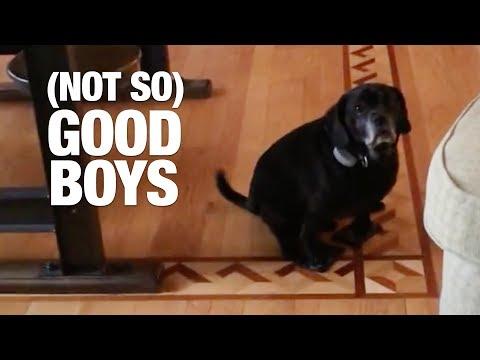 irresistibili-cani-combinaguai