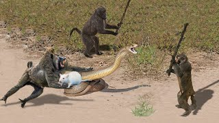 Video OMG! Capuchin Monkey Save Mouse From Banded Krait Snake Hunt | Amazing Python vs Big Cat MP3, 3GP, MP4, WEBM, AVI, FLV Mei 2019