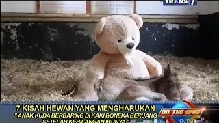 Video On The Spot - 7 Kisah Hewan yang Mengharukan MP3, 3GP, MP4, WEBM, AVI, FLV Desember 2018