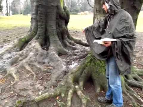 Bastis Beste Bäume - Die Rotbuche