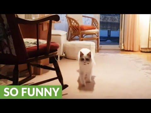 il-gattino-che-gioca-al-riporto