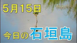 5月15日の石垣島天気