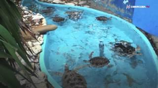 El Acuario Nacional de Cuba es un centro científico especializado en la investigación, la educación ambiental y la divulgación del medio marino, su flora, fa...