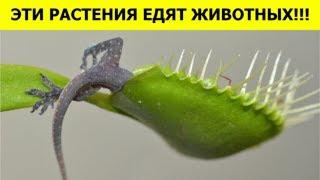 ftSqFpVOevQ
