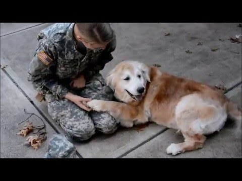 WATCH: Soldier returns home and 13-year-old dog cries with joy