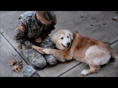 狗狗看到當兵的女主人回家,竟然忍不住癱軟在她腿上的畫面讓我不小心閃了兩滴……淚水!