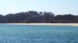 Urunga Australia  City new picture : Dolphins Play in Urunga, Australia