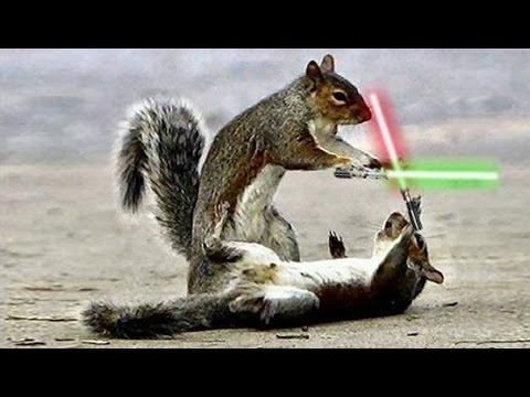 Chipmunk Lightsaber Battle
