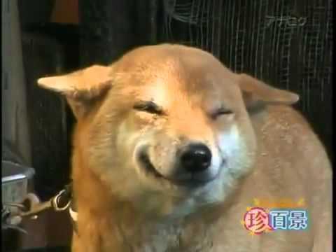 Rie - Video de animales del portal de preguntas y respuestas sobre mascotas Wikianimales.com.