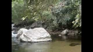 Belihuloya Sri Lanka  City pictures : Nonpareil Estate Belihuloya - Sri Lanka