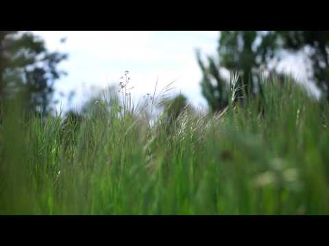 grasslands / Yakusoku wa iranai