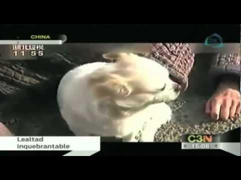 En China un perro cuida de su dueño que se había desmayado en plena calle